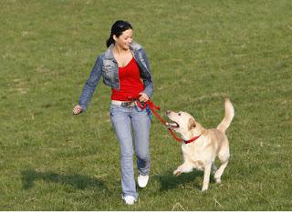 Как да вкараме кучето си във форма?