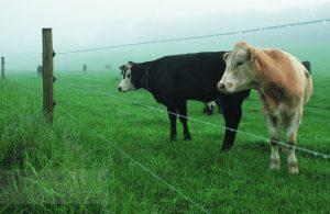 Електрическа ограда за едър рогат добитък