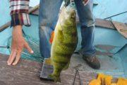 Каква риболовна екипировка ви е нужна за улов на костур и пъстърва?