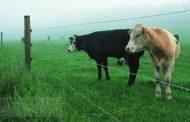 Електрическа ограда за едър рогат добитък – ред и спокойствие